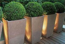 Garden ideas - front & back