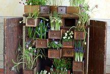 Jardinería, cultivo y más. / Ideas, información, tips, esquemas.