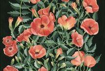 Plant/pattern