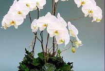 Arranjos  orquídeas