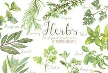 cooking herbs