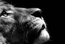 animals/zwierzaki