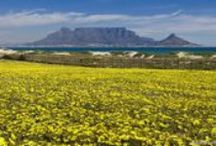 Cape Town, South Africa / Cape Town in the Western Cape province ranks as one of the most beautiful cities in the world. Meet the people and places that makes this city one of South Africa's biggest tourist attractions. #MeetSouthAfrica