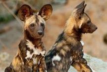 Wildlife of South Africa / Meet South Africa's amazing wildlife.