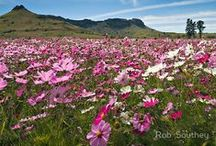Flowers, plants and trees of South Africa