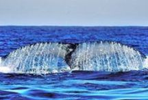 Whale Watching / South Africa is one of the best countries in the world to see whales from. Watch them from boats or the shore, along the coastline from Cape Point in the southern Cape, all the way up to Durban. / by South African Tourism