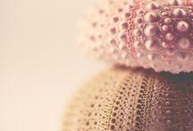 Sea urchin / Love Seeigel