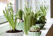 Bulbs / Die erste Frühlingsboten