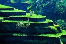 Inspiration Reis   Erzählprogramm live erzählt / Inspirationsboard für mein neues Erzählprogramm mit Geschichten und Mythen über die Kulturplanze Reis ...   ... my research for myths and stories about Rice, my new storytelling program