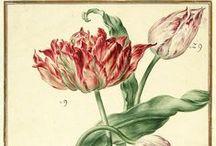Inspiration Tulpe   Erzählprogramm live erzählt / Inspirationsboard für mein zukünftiges Erzählprogramm folge ich dem Weg der Tulpe von Zentralasien nach Mitteleuropa, erzähle von Tulpenfesten im Sultanspalast, vom Tulpenwahn und dem ersten Börsencrash ...   ... stories along the Tulip Road