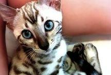 Kitties  / Lovely cats