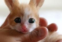 Cute things / Cute creatures