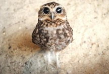 Owls / Owls