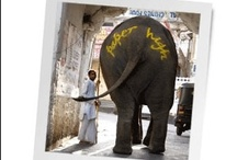 Elephant kingdom  / One of the greatest mammals known to man, we can even make paper from their poo!!