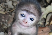 Too Cute! / Adorable animals that will make you smile