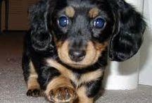 Cute doggies.. / by Barbara Emonet