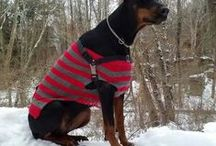 #Doberman #Costumes / Cute and stylish #clothes for #Doberman