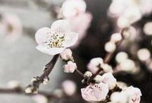 Kukkat