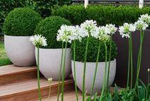 Pots, Macetas. / Tiestos, macetas, jardineras, fundas y recipientes para plantación