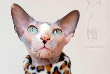 Fashion Maniac for Sphynx - sphynx clothes / Oblečky pro sphynx  sphynx cat clothes