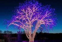 OUtdoOr LightiNg / Iluminación de zonas verdes, de jardines y viviendas, iluminación artistica en negocios, para fiestas, navidad...etc.