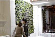 VertiCal GarDen, Hidropónic en Restaurant, Spain / Alijardin ha realizado este jardín vertical hidropónico F+P Mixto en el Restaurante Chema de Guardamar del Segura, Alicante, Spain.