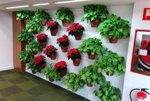 LandsCaping en Madrid, Spain. / Jardineras y cuadros vegetales de diseño para oficinas