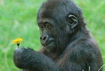 Toutes les merveilles animales de la nature. / Nos amis les animaux, sont des petites beautés tellement intelligentes, parfois l'humain devrait prendre exemple sur eux.