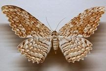 Because I like moths...
