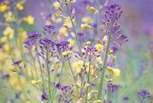 FIELDS OF FLOWERS ✿⊱╮ / Flowering Fields ✿⊱Meadows ✿⊱ Wild Flowers ✿⊱Blossoms  / by Dolores Hook