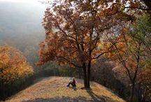 Bakony hegység/ hill / Mór a Vértes és a Bakony között fekszik, egy igazi magyarországi Provence :-)