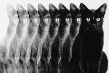 black CATs /  meow