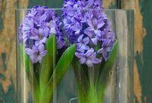 Príroda,kvety