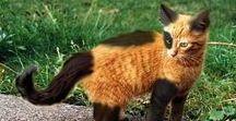 Kitten/jonge katjes