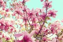 Beautiful + Inspiring Nature