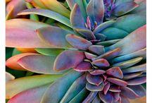 Succulent & cacti