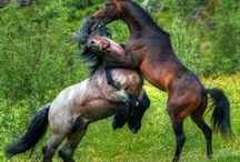 horses running free / by Eunice Ball