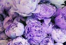 Color Love | Purple / Violet, Purple, and Indigo