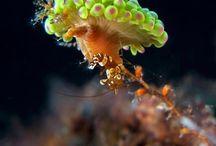 Deep Sea Macro