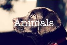 Animals / A collection of the most adorable animals for your viewing pleasure!