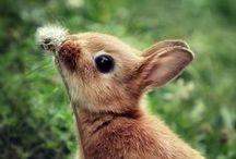 Rabbit ☆