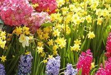 P. Spring image