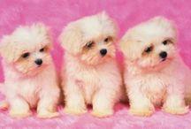 DOGS-Psy