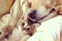 Köpekler ve kediler.Cocuk ve hayvan sevgisi olmayandan,merhamet beklenmez. / Sadık dostlarımız,kopeklerin ve kedilerin bile kavgayı bırakıp,birbirlerinin yavrularını sahiplendiği bu dünyada biz insanlar neden hala birbirimizi yiyoruz.nedir bu öfke kardeş değilmiyiz.