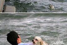Müthiş kurtuluşlar. / Ölümün kıyısından dönen,hayvansever insanların kurtardığı Canlar.