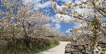 Senderismo por España, <espacios> / ¿Listo para disfrutar de España en primavera? Pues toma nota de los  mejores lugares de senderismo para la temporada.  La primavera es para muchos la estación más bonita del año, porque tiñe los campos de flores y los mares de reflejos de sol. No esperes más. Cálzate unas botas y sal a su encuentro. Te esperan miles de senderos con licencia para encantar.
