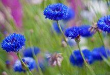 Gardening / by Deb Jencks