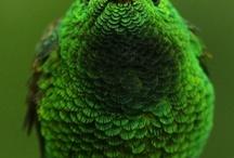 Palette 3 So Green