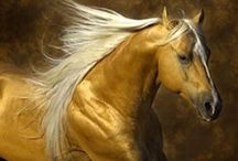 Equine Beauty / by Deb Jencks