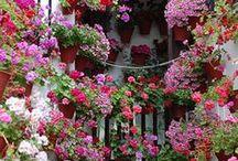 """""""  JARDINES """" / Jardines de todo tipo - Hidroponicos....."""